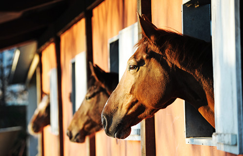Cancer in Horses | NASC LIVE