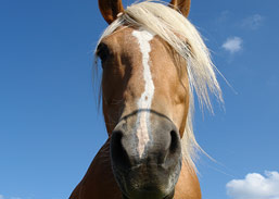 Bacterial Infections and Horses | NASC LIVE