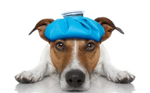 3 Key Facts About Canine Influenza